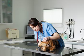 Imagem destaque Medicina Veterinária