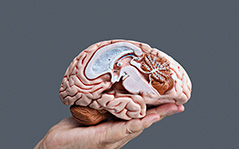 Saúde Mental e Coletiva na Perspectiva da Clínica Ampliada